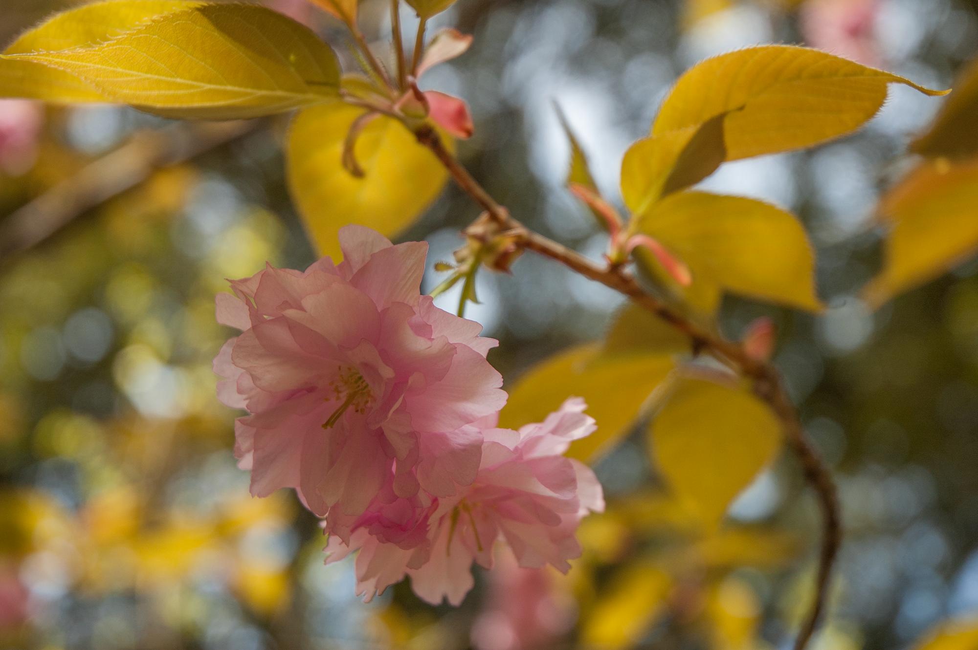 星のや京都すぐ近くのお寺の花