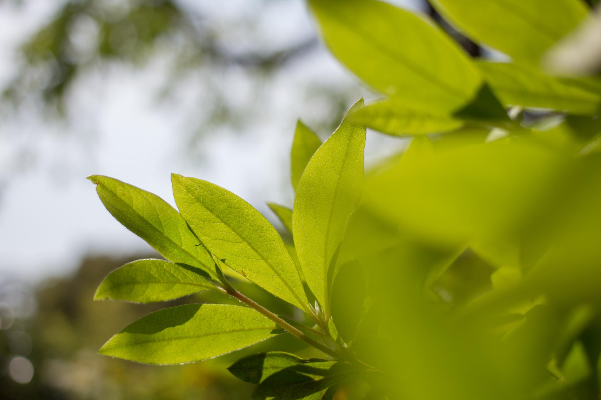 星野リゾート 界 伊東 庭園 新緑の葉