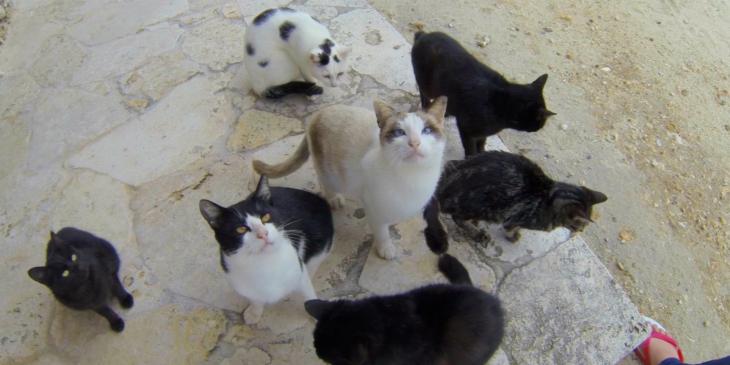 沖縄 竹富島 コンドイビーチ 猫