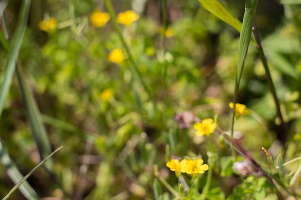 北鎌倉 黄色い花