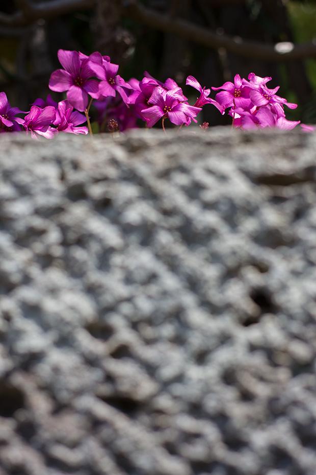 北鎌倉 花