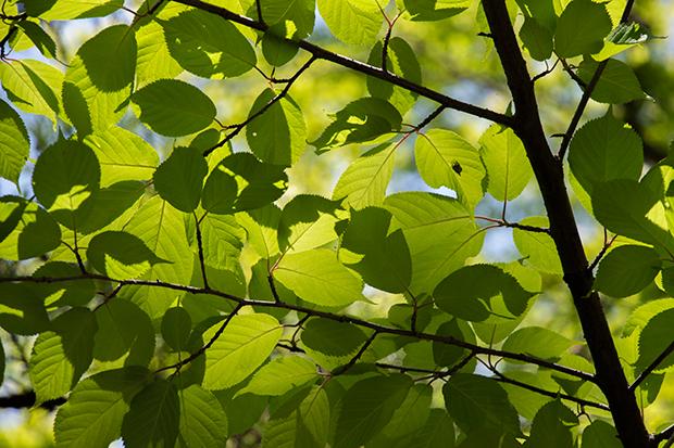 北鎌倉 新緑