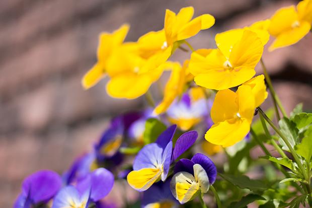 鎌倉 花壇の花