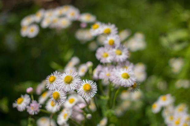 鎌倉 花々