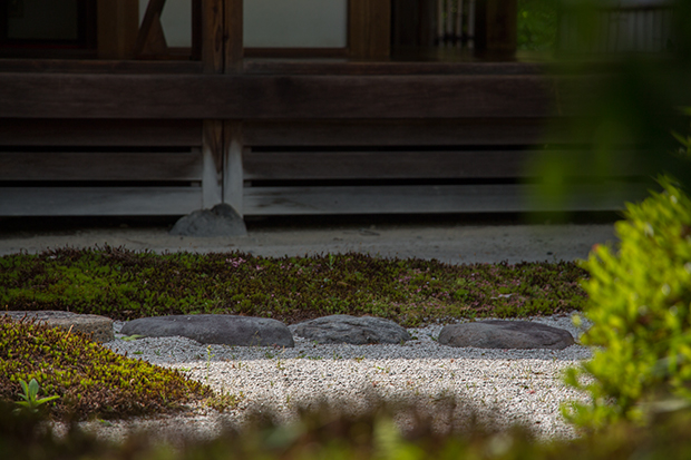浄妙寺 日本庭園の苔