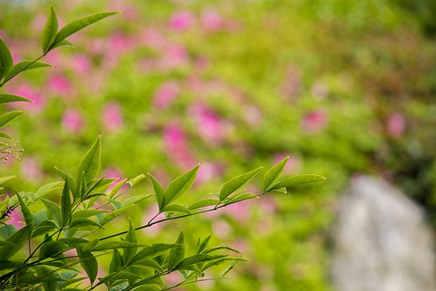 浄妙寺 日本庭園