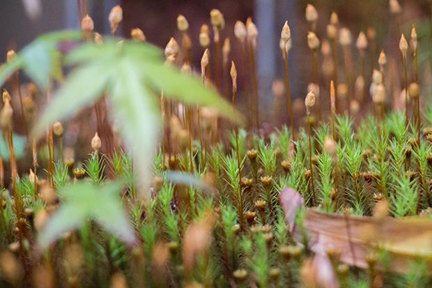 星のや 京都 植物
