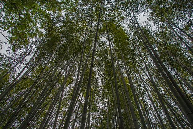 京都 嵐山 竹の道