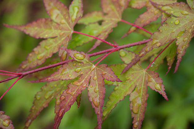京都 嵐山 天龍寺の紅葉