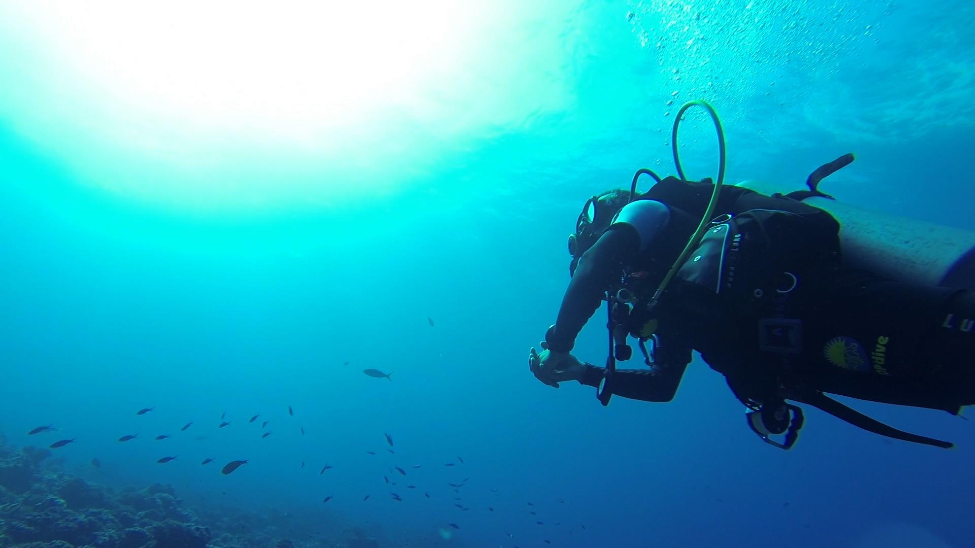 タヒチ ランギロア島 プロモーション動画 観光 ダイビング