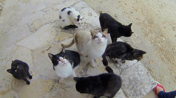 竹富島 コンドイビーチの猫たち☆